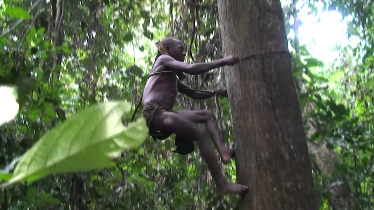 Pygmies - The Children Of The Jungle - YouTube