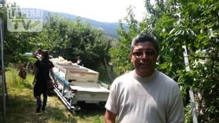 Piscadores de cerezas en Wenatchee