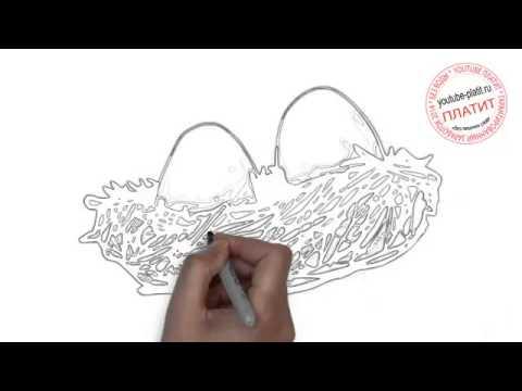 Видео как нарисовать гнездо поэтапно