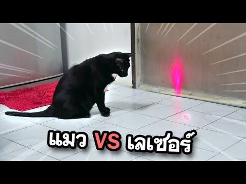 แมวเจอเลเซอร์ครั้งแรก เป็นยังไง!? EP12   เขม่า แมวดำ แมวตลก