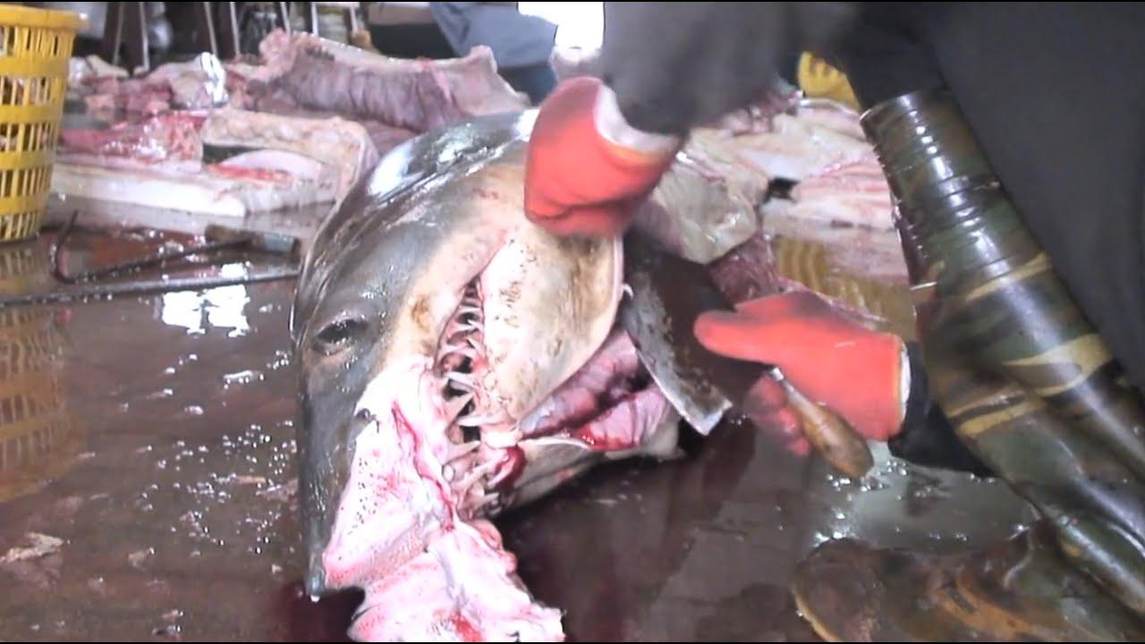 China Whale Sharks Biggest Ever Shark Slaughterhouse