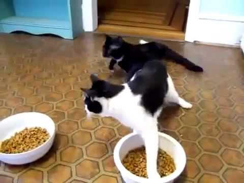2 Cats High On Drugs (LSD addict)