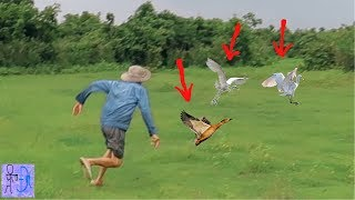 Đi Bắt Gà Rừng Ngoài Đồng Như Phim Hành Động Mỹ. Amazing Catch Wild Chicken .Tìm Rắn Bắt Gà Đồng