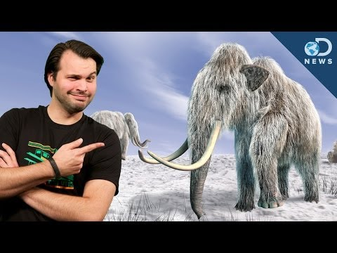 Are We Finally Ready To Clone A Mammoth?