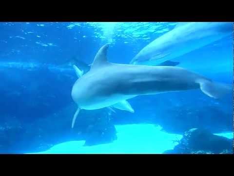 Dolphin Sex !!! video