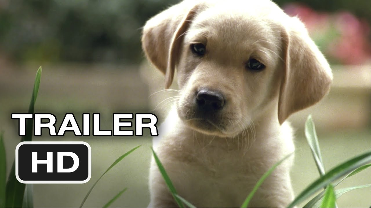 Best Movies To Watch With Your Dog