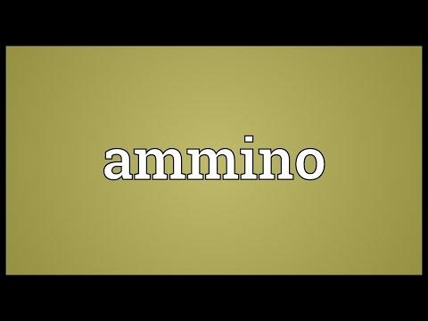 Header of Ammino