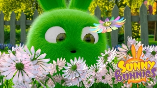 | Sunny Bunnies SUNNY BUNNIES FLOWER FIELD | Funny Cartoon for Kids