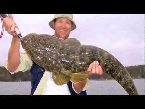 "REEL IT IN -  "" How To Catch Big Dusky Flathead""  PART 1"