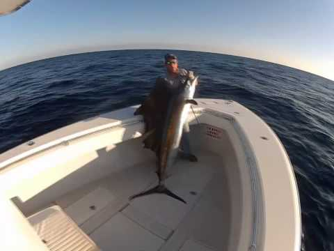 Oak Island Fishing Charters Sailfish