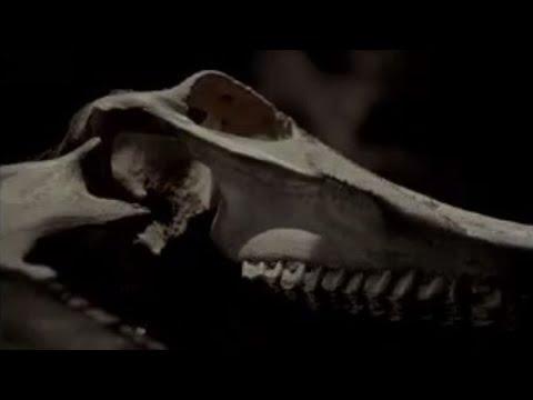 Hidden cave death trap - Wild New World - BBC