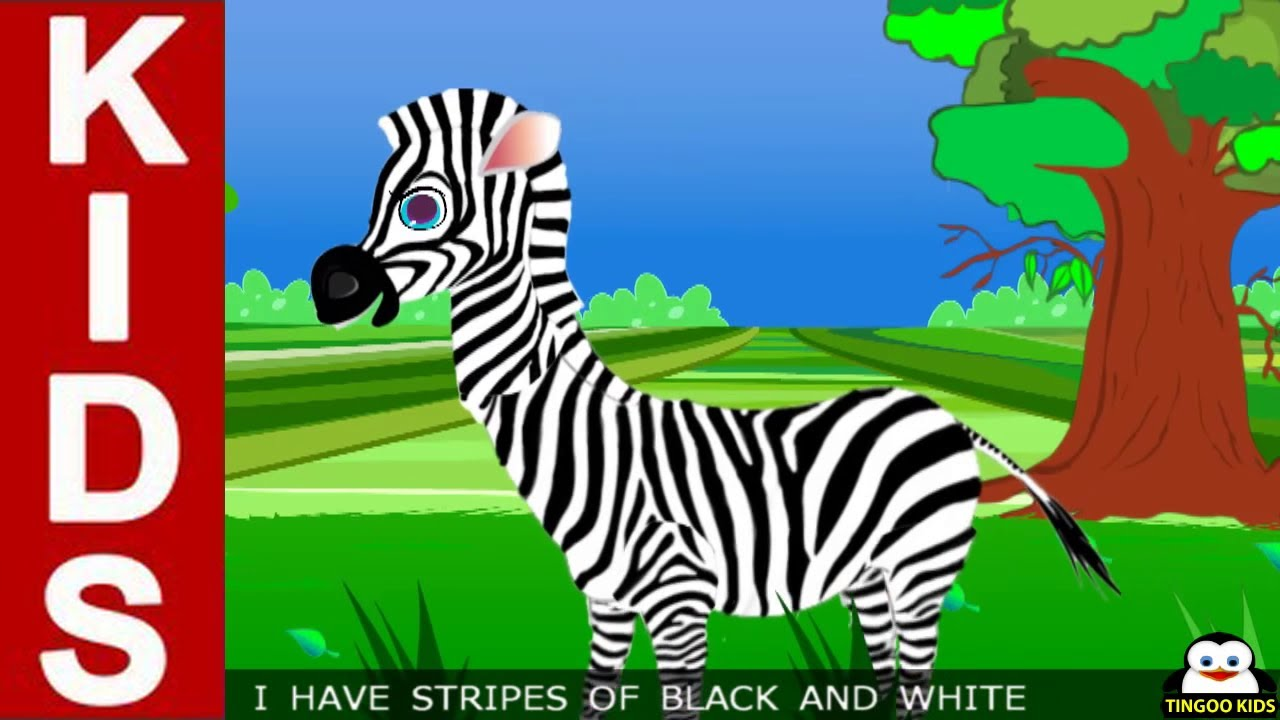 Zebra Pictures For Kids Learn About Zebra  Kids