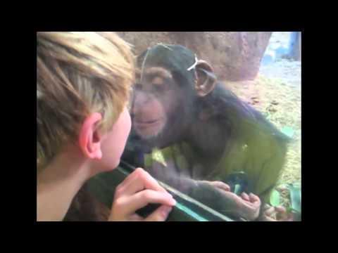 дети в зоопарке,реакция животных!