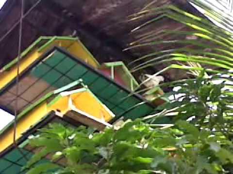 Pagupon Burung Merpati