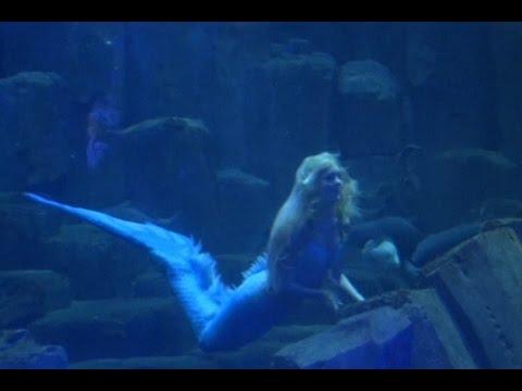 Putri Duyung Membuat Kegemparan di Aquarium Paris
