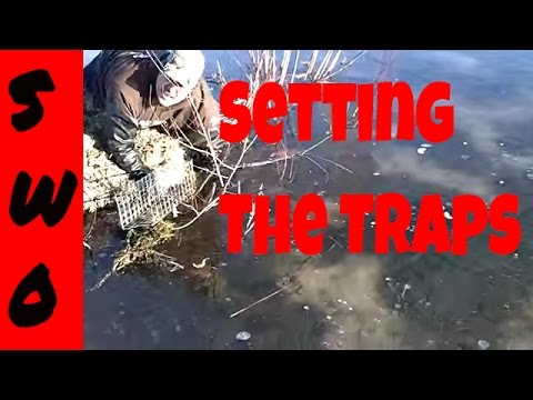 Under Ice Muskrat Trapping Part 2 (Making the Sets)