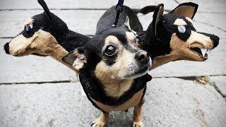 Смешные собаки Приколы про собак Funny Dogs 2019 (Популярные выходки)