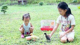 Shinta Memelihara Anak Bebek lucu- Cute Ducklings for kids