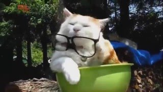 Funny crazy cats