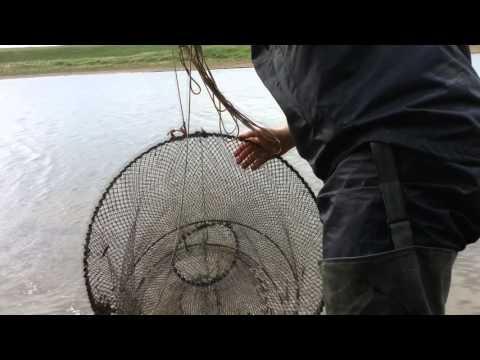 рыбалка вершами вентерями видео