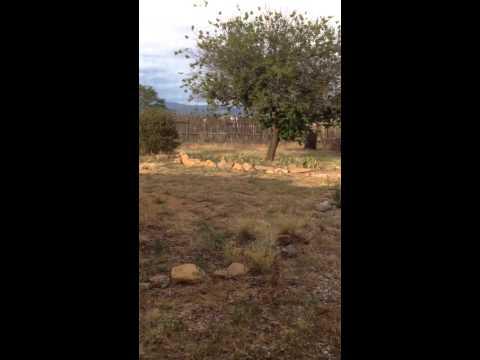 Scaled Quail dad and chicks Santa Fe NM