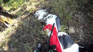 Paragliding vs. Eagle