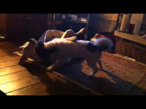 Gay Dog Love video
