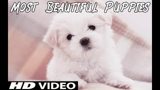 Most Cutest Puppies in the World 🐶 || Cute Animals And Birds 🐾