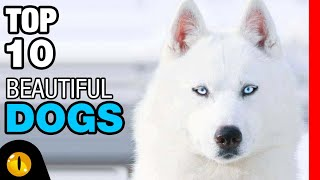 TOP 10 BEAUTIFUL DOG BREEDS