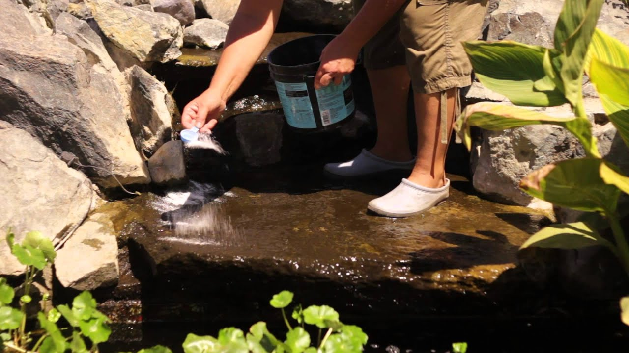 How To Keep A Backyard Pond Clean Solving Plant Needs