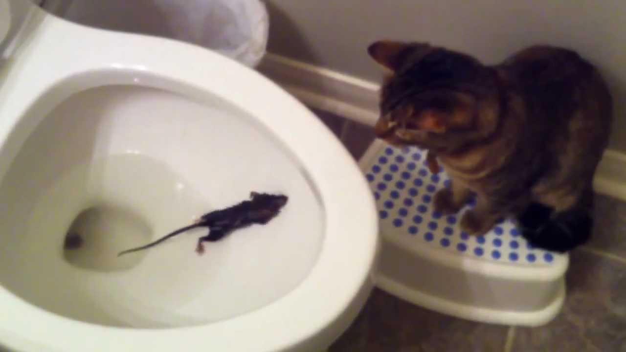 Gato Pillando Raton En La Taza De Ba O Youtube