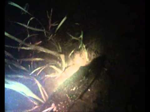 фонари для ловли рыбы ночью