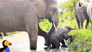 Baby Elephant Stuck In River Gets A Push From Mom | The Dodo