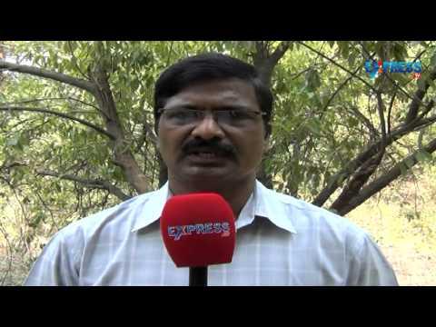 Wilt control in Crossandra cultivation (Kanakambaram) - Paadi Pantalu