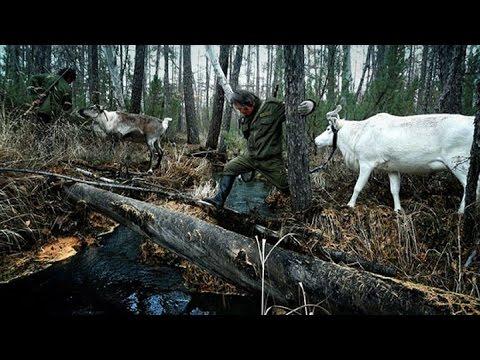 Documentary Q & A: 'The Last Moose of Aoluguya'