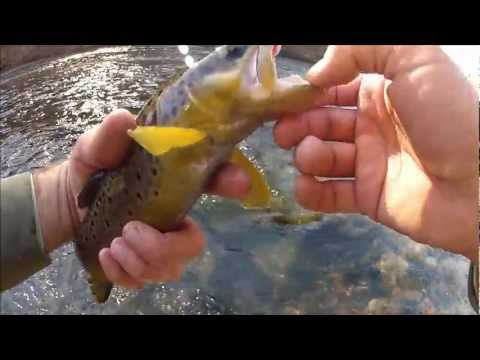 Early Winter Fly Fishing in Pennsylvania 2012HD