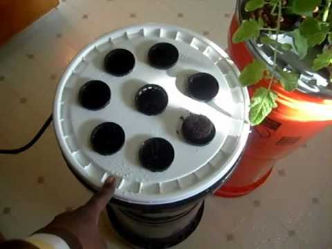 THE BEST CHEAPEST HYDROPONIC CLONER SYSTEM AVAILBLE EXCELLENT FOR CUTTINGS AND CLONES