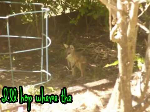Cute Wallaby Joey Disturbed By Wildlife Papparazzi
