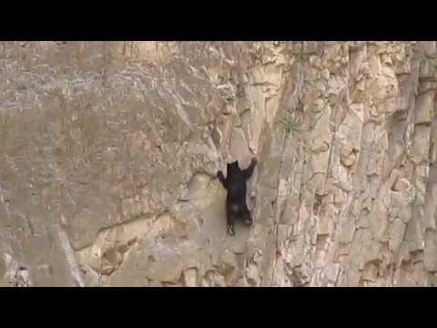 切り立った崖を器用に登っ...