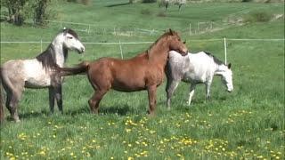 Decksprung ~ natur mating, at * The Wild Horse Place