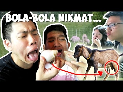 Makan Kemaluan Kambing bikin Coconut Ivory Boys Mual Keenakan!!!