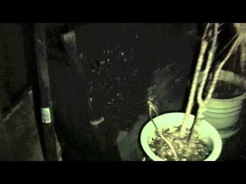 TurtleMan - Honey Bees