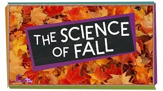 The Science of Fall | Compilation