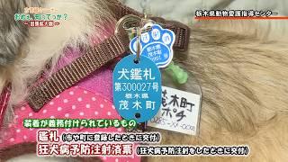 「おめぇ、知ってっか?」出張拡大版!栃木県動物愛護指導センターで、飼い犬が迷子になったときはどうすればいいかを聞きました!