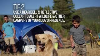 Backyard Camping Tips