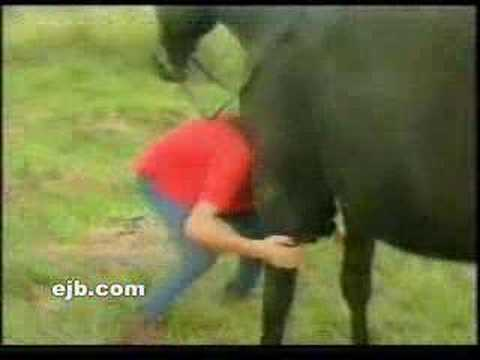 Funny Horse Video