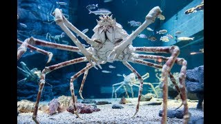 Top 10 Scariest & Terrifying Animals Around The World - Unidentified Mysterious Creatures