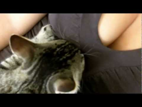 Breastfeeding Cat video