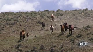 Drought Has Endangered Horses, But One Organization Is Determined To Help | NBC Nightly News