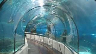Barcelona - Aquarium